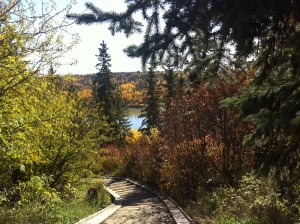 My beloved Edmonton river valley donned her prettiest fall party frock for the occasion.